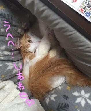 こたつ②.JPG