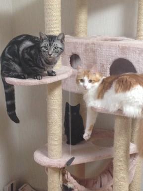 猫タワー.JPG