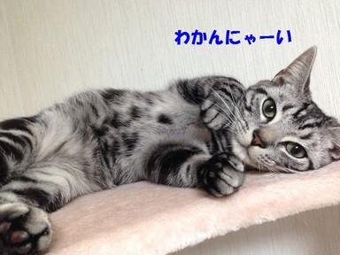 IMG_0955.JPG